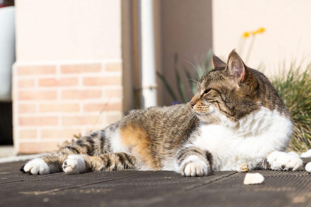 Chat couché sur sa terrasse